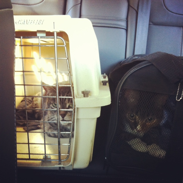 the cats in the Ford Focus Titanium