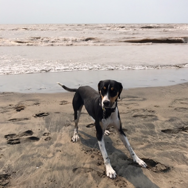 Billie Jean at Long Point Beach