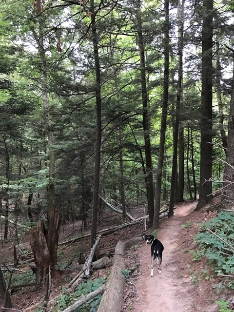 Billie Jean hiking at Long Point