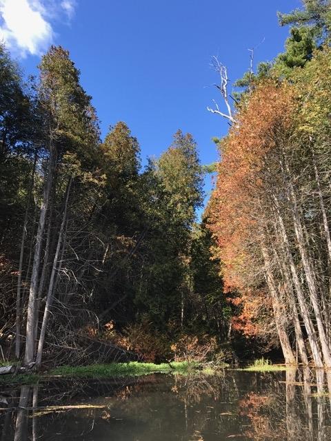 Whispering Springs lake